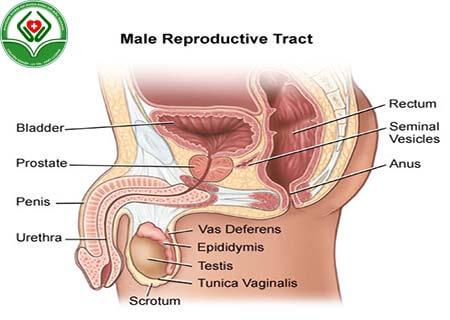 Tác hại của bệnh tăng sinh tuyến tiền liệt