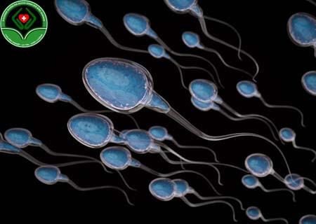 Thế nào là tinh trùng