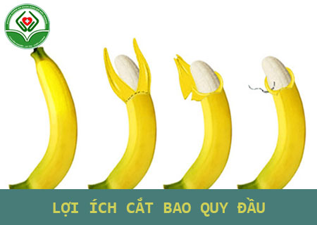 loi-ich-cua-cat-bao-quy-dau