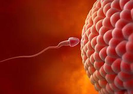 Cần bao nhiêu tinh trùng để thụ thai