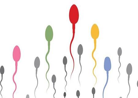 Tinh trùng di chuyển chậm nên ăn gì