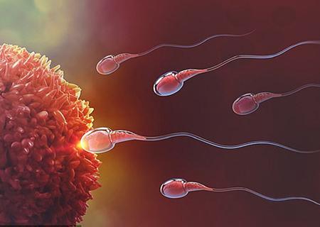 Tinh trùng nam giới là gì?